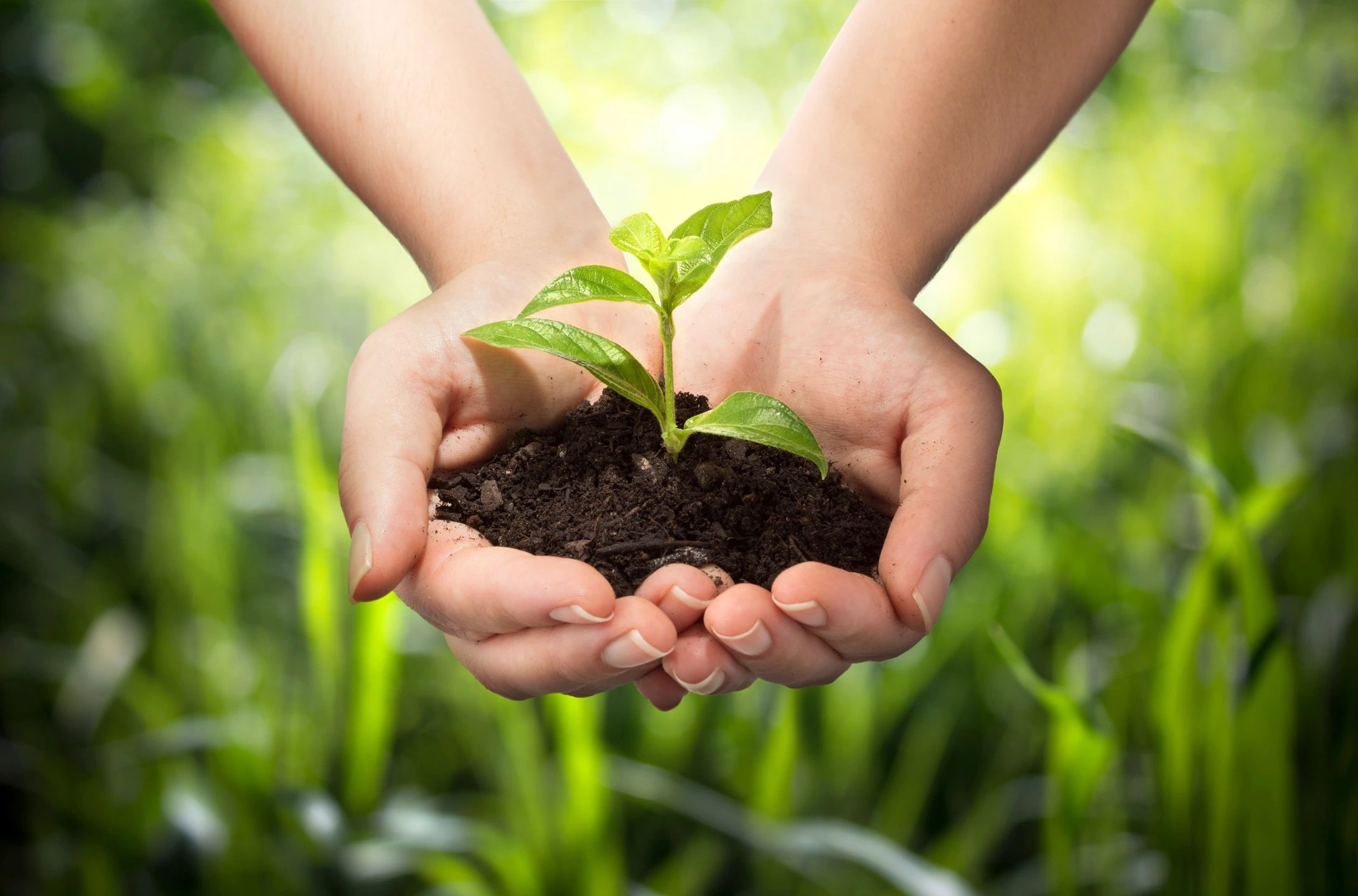 Image of hands holding dirt, signifying our stewardship of the planet.